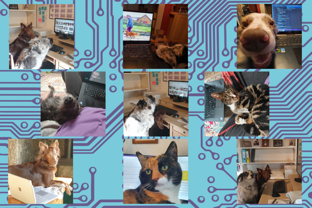 Pets beside computers.