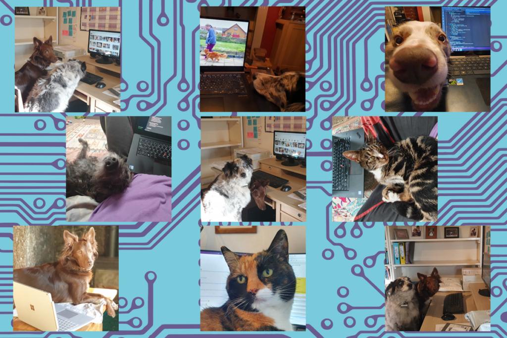 Pets beside computers.